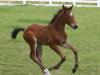 bacchus-foal_