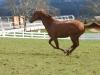 edmonde-gallop-2011
