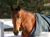 shakira-pasture-blanket