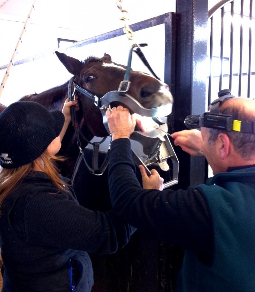 Tony Basile equine dentist