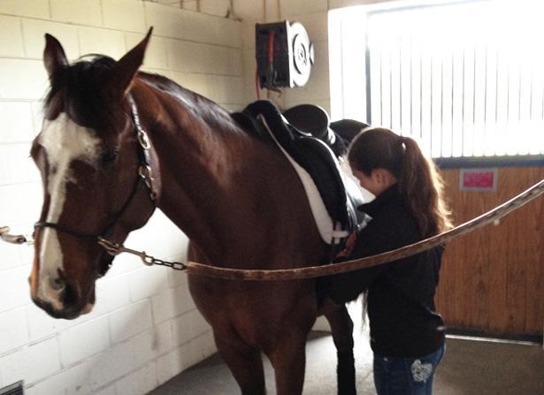 Deborah's working student Ashton Vosburg grooming Alexxis