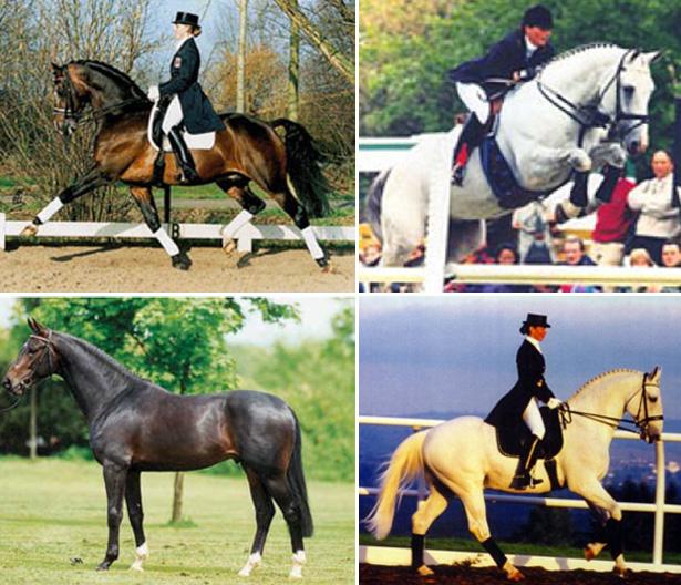Quailhurst-Superior-Equine-Sires